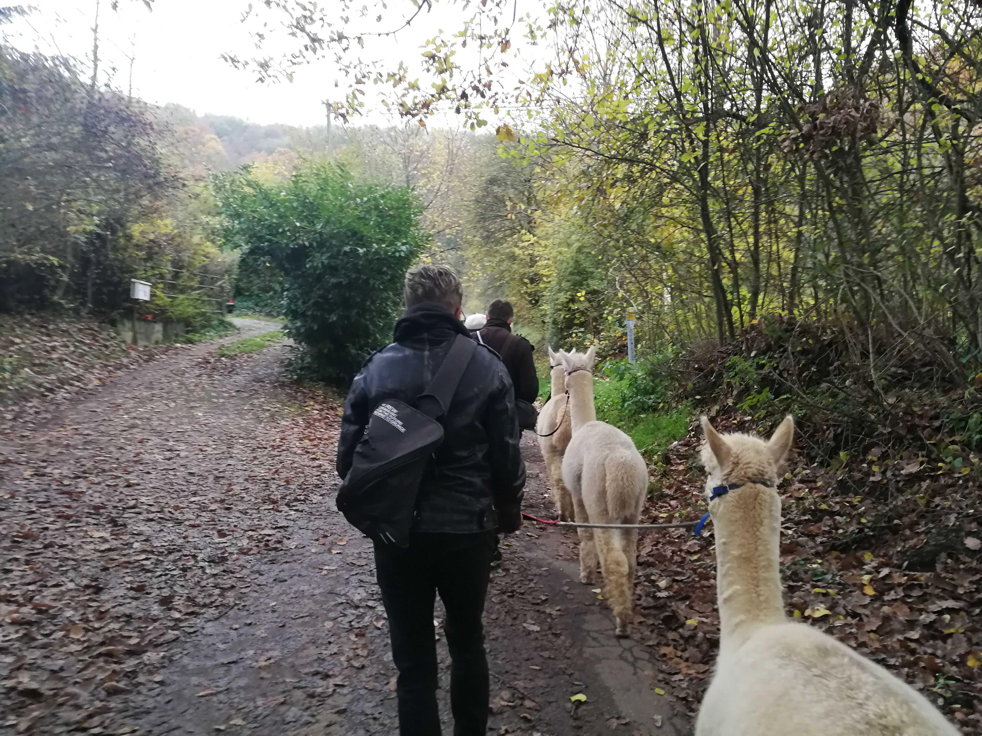 Das embedded data-Team beim Wandern mit Alpakas